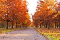 autumn park - stock photo