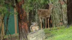 Deer and little squirrel Stock Footage