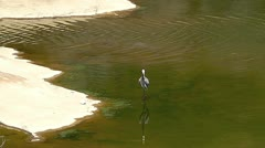 Heron at Pedernales State Park I Stock Footage
