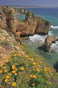 flowers and seaside cliffs, algarve, portugal - stock photo