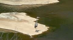 Heron at Pedernales State Park Preens Stock Footage