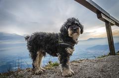 Small dog in mountains Stock Photos