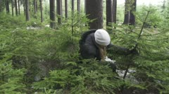 Young woman cutting a spruce tree Stock Footage