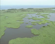 Aerial shot Oostvaardersplassen wetlands with Markermeer in background Stock Footage