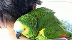 Tame parrot sitting on the shoulder - stock footage