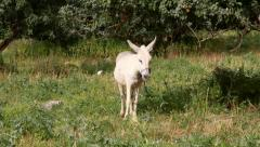 Donkey Stock Footage