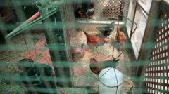 Chicken Coop - stock footage