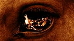 Eye beast - stock footage