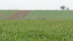 Spring field covered with bright green grass Stock Footage