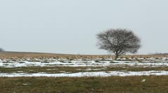Lonely empty tree on a spring field with some lately snow Stock Footage