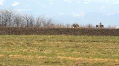 Group of deer walking on the spring meadow Stock Footage