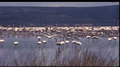 Safari, Kenya, Africa, 1970 (vintage 8mm film) Stock Footage