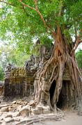 Banyan rooting in angkor Stock Photos