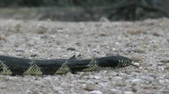 Snake Slithers Low Angle POV Stock Footage