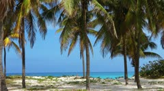Varadero Beach Cuba And Palm Trees With Ocean Background Stock Footage