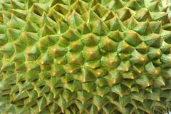 durian - stock photo
