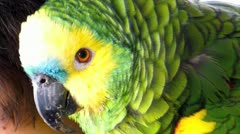 Tame parrot - stock footage