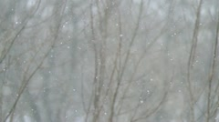 Large snow against branches falls. Stock Footage