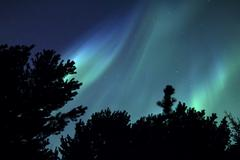 Forest Northern Lights 1 v2 - stock photo