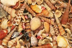 variety of colorful sea shells - stock photo