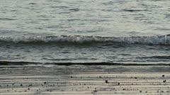 Ibis Costa Rica Beach 2 Stock Footage