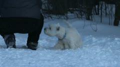 small doggie runs on snow - stock footage