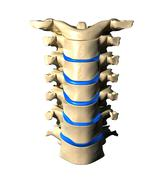 Lumbar Spine - Anterior view / Front view - stock photo