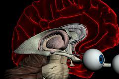 Human brain scan Stock Photos