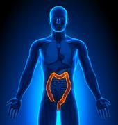 Medical Imaging - Male Organs - Colon - stock photo
