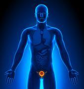 Medical Imaging - Male Organs - Bladder - stock photo