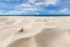 Shells on a beach - stock photo