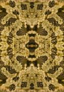 Symmetrical image frog Stock Photos