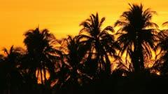 Sunrise Palms Gulf of Papagayo Costa Rica Stock Footage