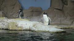 Arctic penguin video 1080P Stock Footage