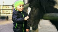 Stock Video Footage of Little boy with mother caresses little pony, slow motion shot at 240fps