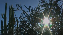 Fading Sun Star Cactus Time Lapse Stock Footage