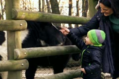 Little boy with mother caresses little pony, slow motion shot at 240fps Stock Footage