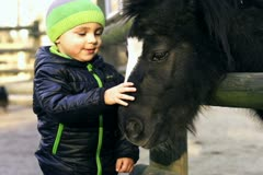 Little boy with mother caresses little pony, slow motion shot at 120fps Stock Footage
