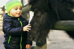 Little boy with mother caresses little pony, slow motion shot at 240fps - stock footage