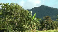 High tree jungle covered mountains on Panay island in the Philippines Stock Footage