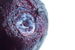 blueberry closeup (macro) - stock photo