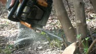 Chainsaw work (1) Stock Footage