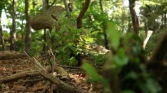 Tree trunks and branchs 09 Stock Footage