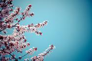 Stock Photo of Blossoming tree branches in springtime