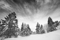 black and white winter - stock photo