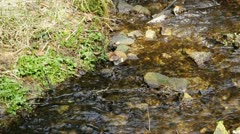 Creek with clear water Stock Footage