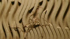 Squished spider 2 Stock Footage