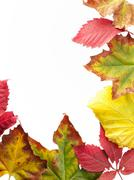 fall frame - stock photo