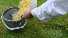 Boiled peas bucket water Stock Footage