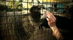 Fed Through The Fence Stock Footage